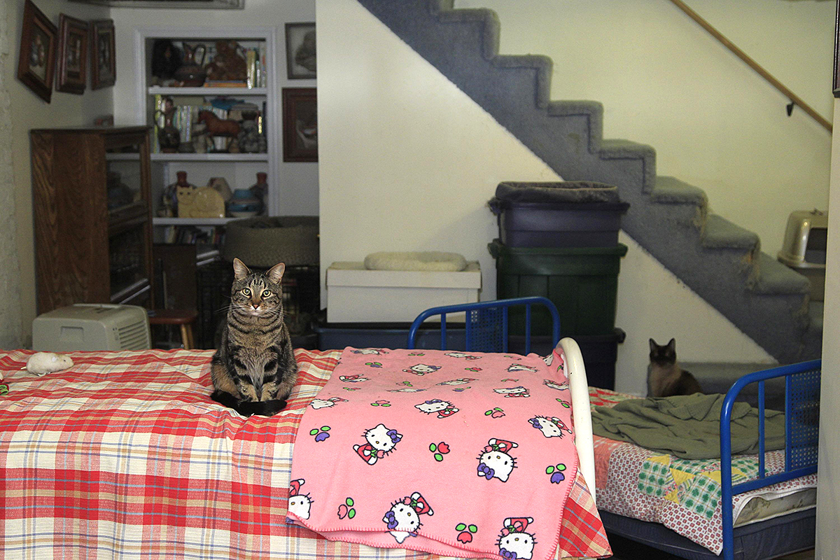 Kitty Lodge photo